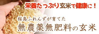 栄養たっぷり玄米で健康に!桜島ふれんずが育てた、無農薬無肥料の玄米