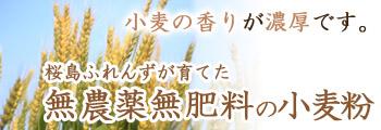 小麦の香りが濃厚です♪桜島ふれんずが育てた、無農薬無肥料の小麦粉