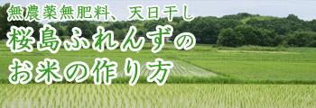 無農薬無肥料、天日干し!桜島ふれんずのお米の作り方