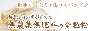 栄養たっぷりで香りもバツグン 桜島ふれんずが育てた、無農薬無肥料の全粒粉