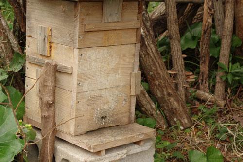 ミツバチの養蜂箱の写真