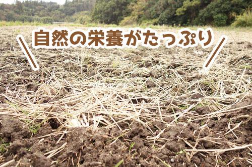 稲わらのまかれた田んぼ