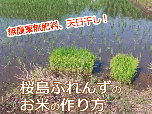 桜島ふれんずのお米作りの1年
