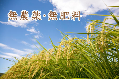 無農薬・無肥料で育てています