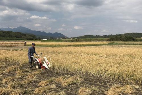 稲刈り中の風景