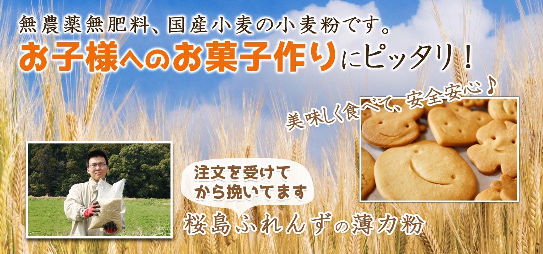 無農薬無肥料、国産小麦の小麦粉。お子様へのお菓子作りにピッタリ!