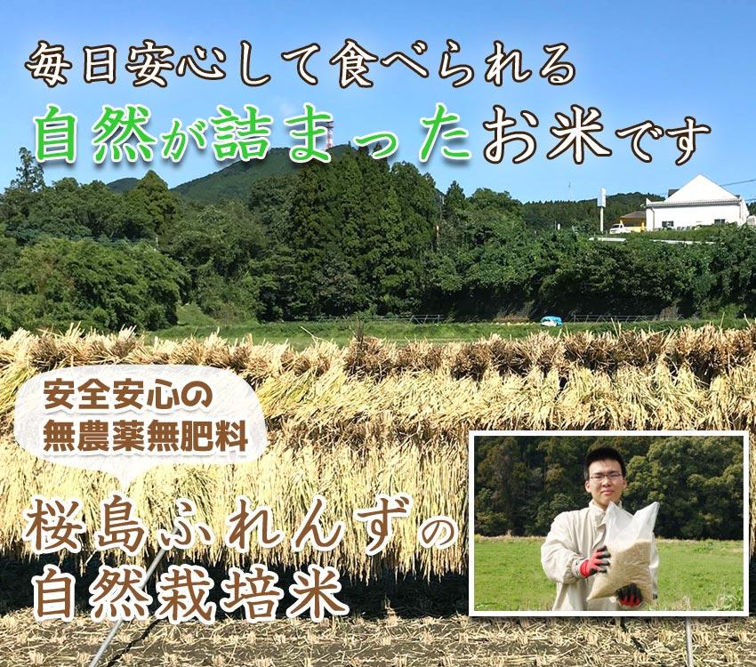 通常のお米の半分しか収穫できない、自然の農法にこだわりぬいたお米です。桜島ふれんずの無農薬、無肥料米