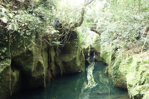 神秘的な渓谷を流れる高隈連山からの湧き水