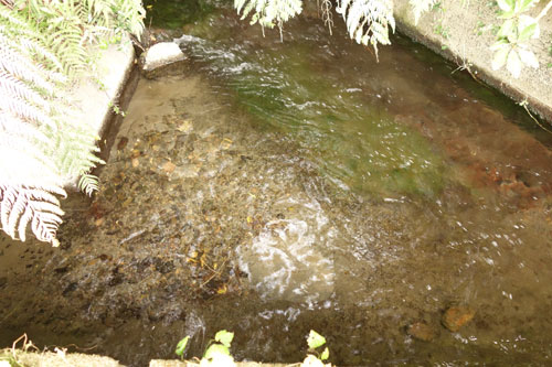 田んぼに入る綺麗な水