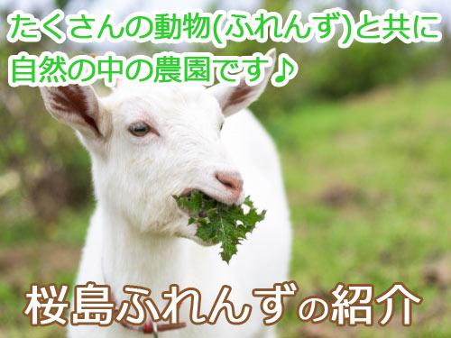 桜島ふれんずの紹介